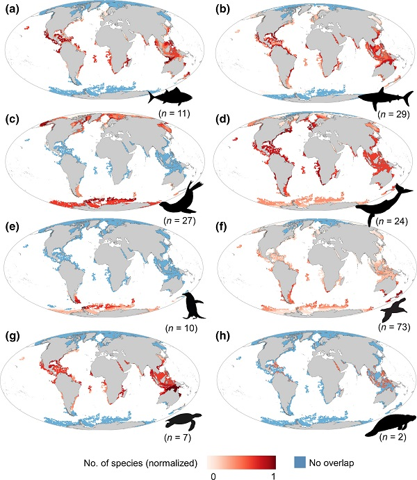 Maps of the spatial overlap between gaps of the Argo network and extent of occurrence