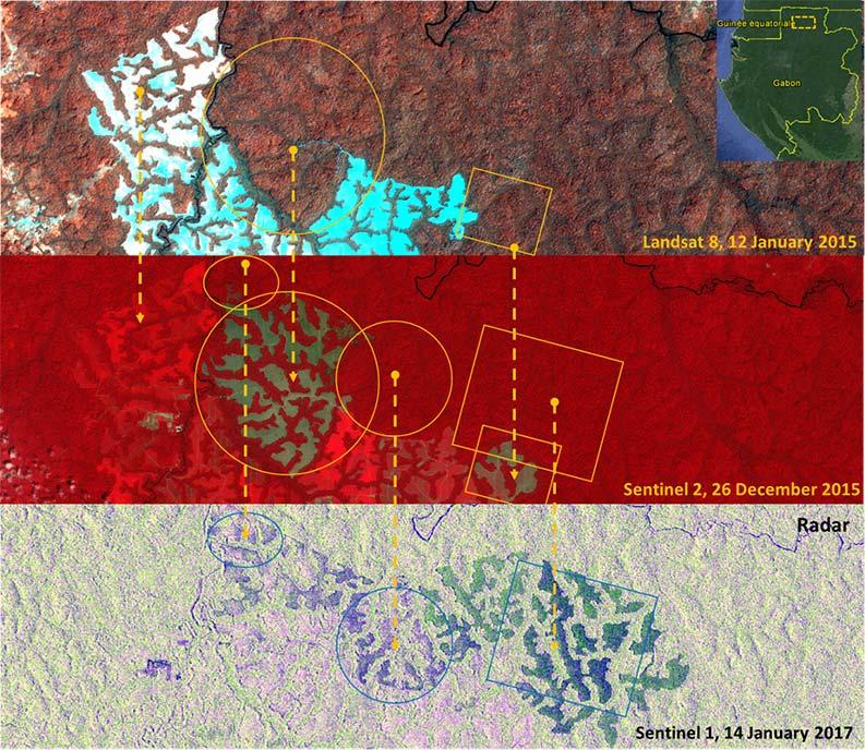 images optique et radar du couvert forestier