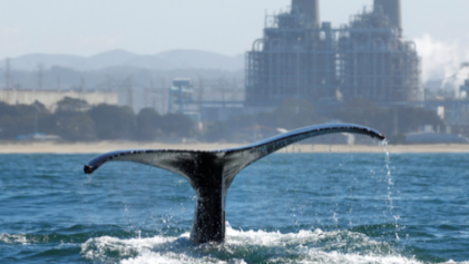 oceanography and biodiversity