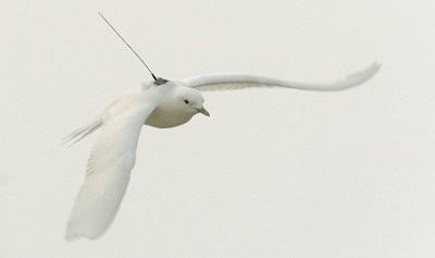 oiseau avec une balise