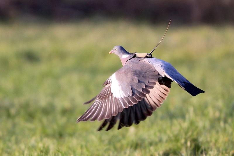 oiseau avec un tag