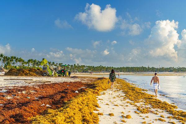 sargasses sur une plage