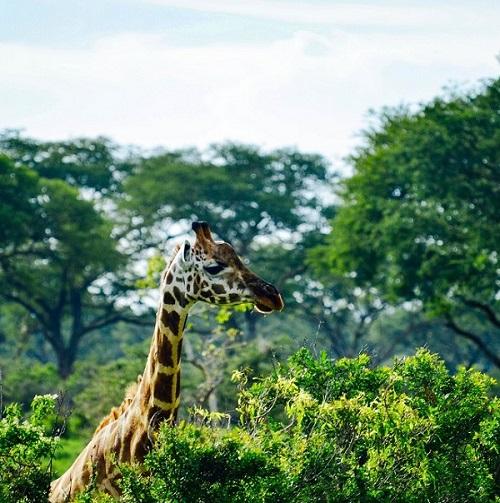 projet service forêts