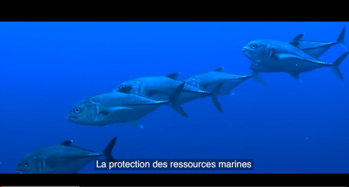 protection-ressources-marine