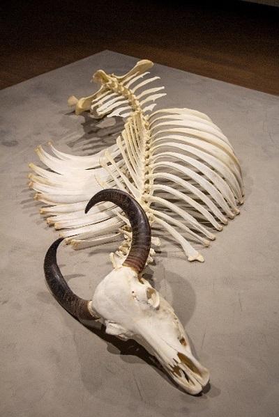 squelette d'animal